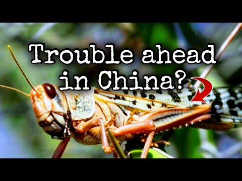 Drones vs Locusts in China | South China Sea Update